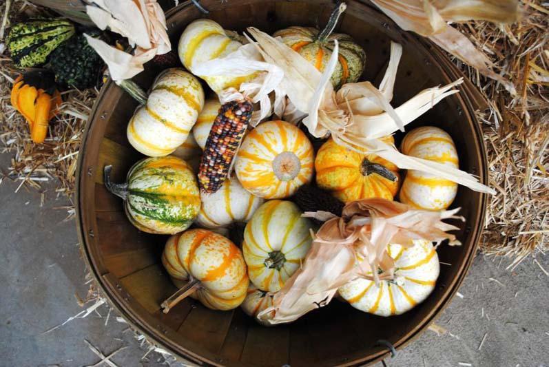 Mixed Fancy Pumpkins