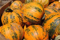 Tiger Stripe Pumpkins