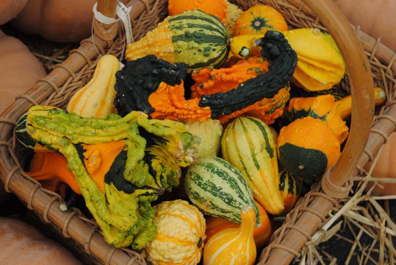 WInged Gourds